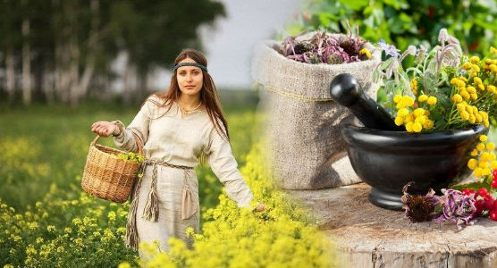 Монастырский чай — развод для доверчивых или лекарство для больных
