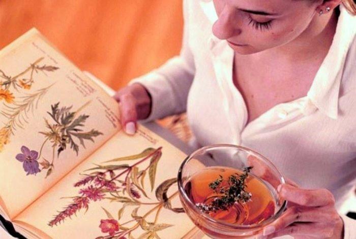 Монастырский чай иммунитет — сила природы для активизации ресурсов организма