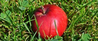 Что входит в монастырский сбор для похудения какие травы