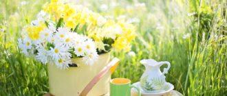 Монастырский чай для похудения в алматы